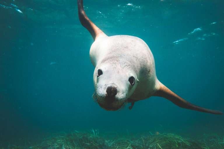 Marine wildlife in the sea